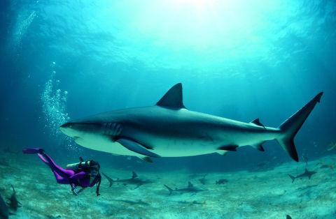 Lo sharkini il costume che hai sempre sognato se sei fissata con gli squali - Bagno con gli squali sudafrica ...