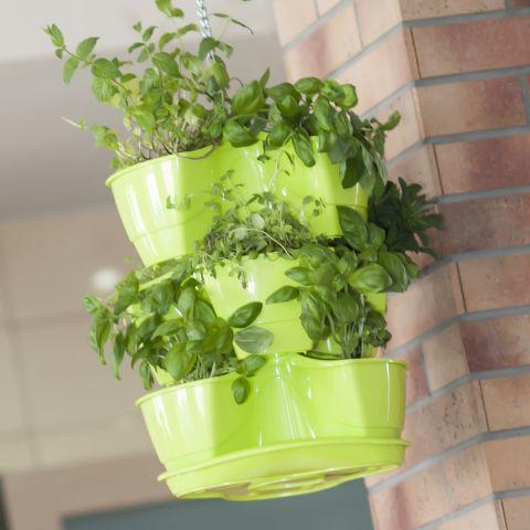 Giardino verticale il tuo angolo di verde in poco spazio - Piante per giardino verticale ...