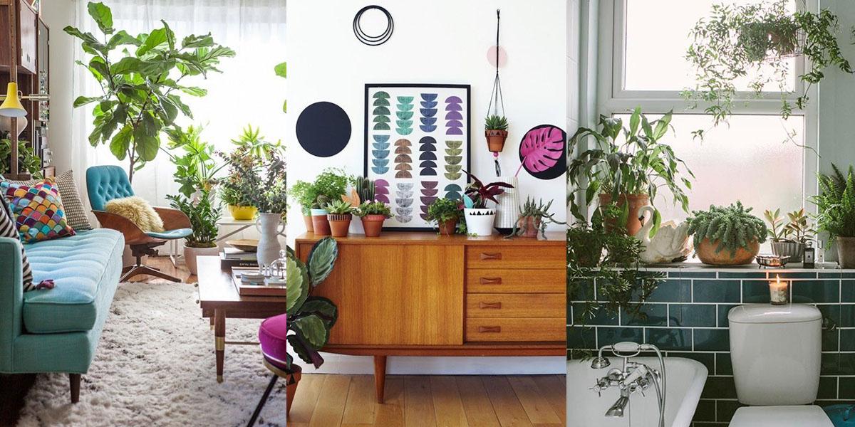 18 modi per usare le piante e trasformare la tua casa i for Piante in casa