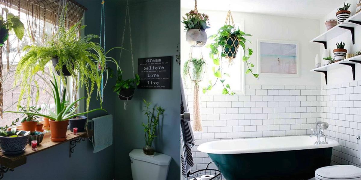 Le piante da bagno da avere in casa se non hai il pollice - Piante da bagno ...